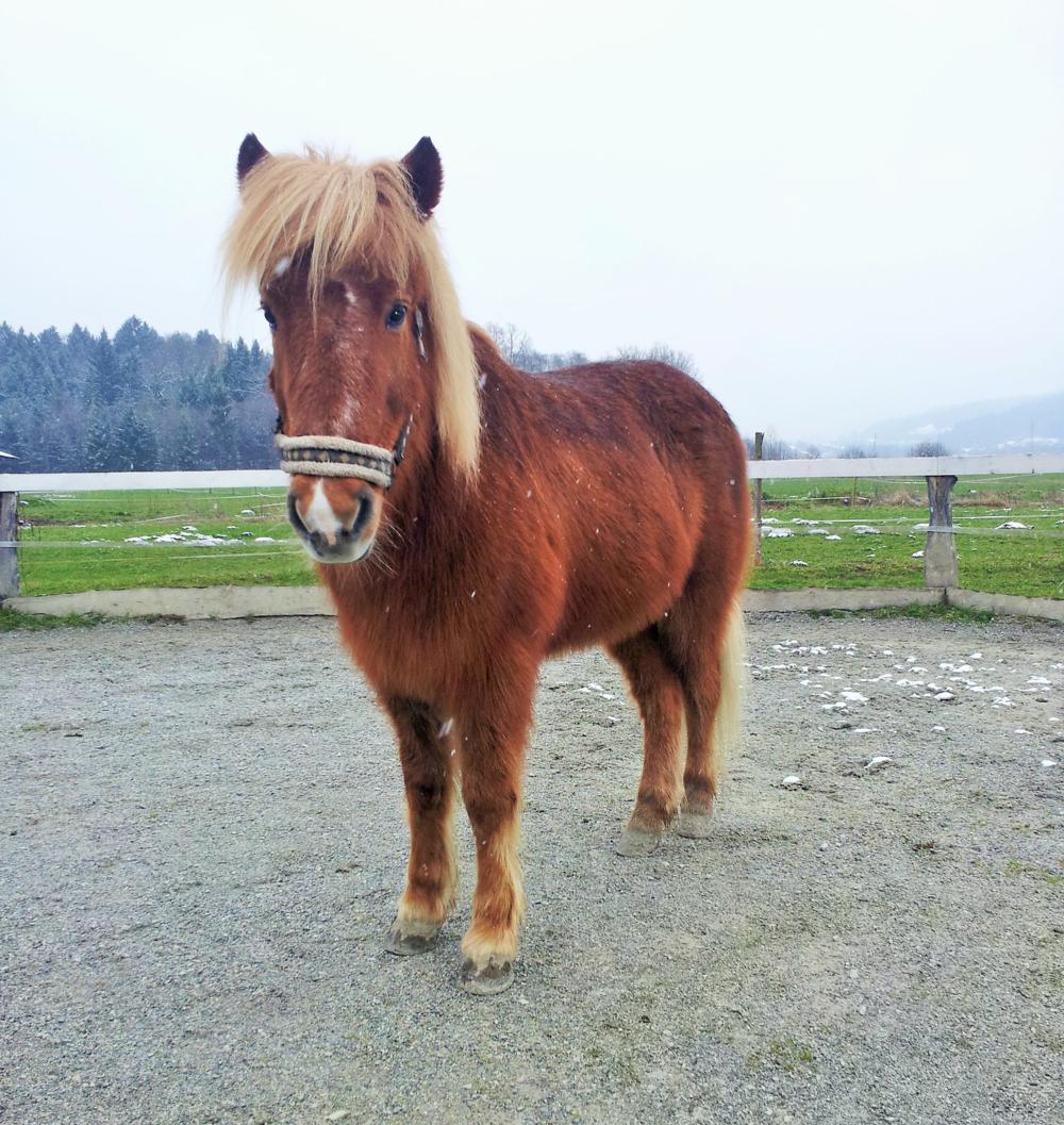 Rok Šilc, lastnik tekmovalnega konja Moj konj Soldan je zaradi osteoartritisa komaj hodil. Po zdravljenju z matičnimi celicami sem prve spremembe opazil po 4 mesecih. Čeprav je konj še šepal, je zaradi izgube bolečine postal bolj živahen. Eno leto po zdravljenju z matičnimi celicami pa so rezultati izjemni! Soldan je v zelo dobrem stanju, v koraku hodi popolnoma normalno, občasno tudi že galopira.
