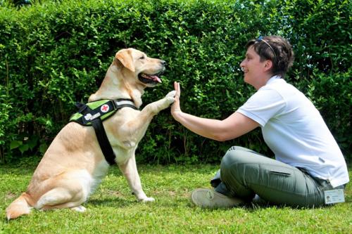 Monika Rijavec, Besitzerin einer 8 Jahre alten Labrador-Hündin Bellis (8 Jahre) Zustand hat sich nach der Stammzellapplikation deutlich gebessert. Vorher hat sie wegen Schmerzen nie mit anderen Hunden gespielt oder sie zum Spiel aufgefordert. Einige Monate nach der Therapie begann sie zu spielen, sie konnte wieder springen und laufen.