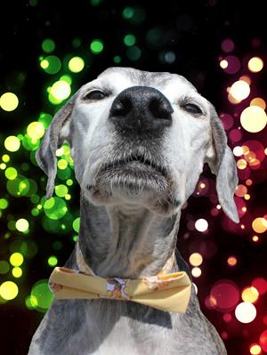 Sophie s Dog WalksSophie s Dog Walks   Professional dog walker providing reliable  . Dog Walkers Bath Area. Home Design Ideas
