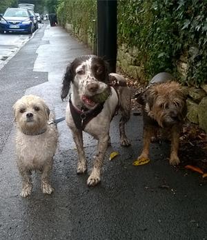 1 jpgSophie s Dog Walks   Walks   Professional dog walker providing  . Dog Walkers Bath Area. Home Design Ideas