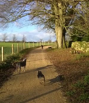 6 jpgSophie s Dog Walks   Walks   Professional dog walker providing  . Dog Walkers Bath Area. Home Design Ideas