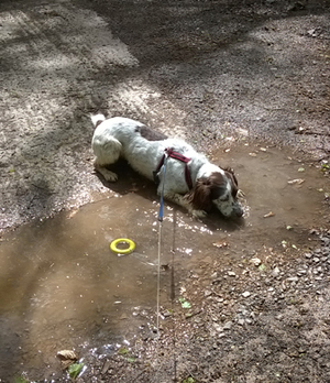 Sophies Dog Walks Walks Professional dog walker providing
