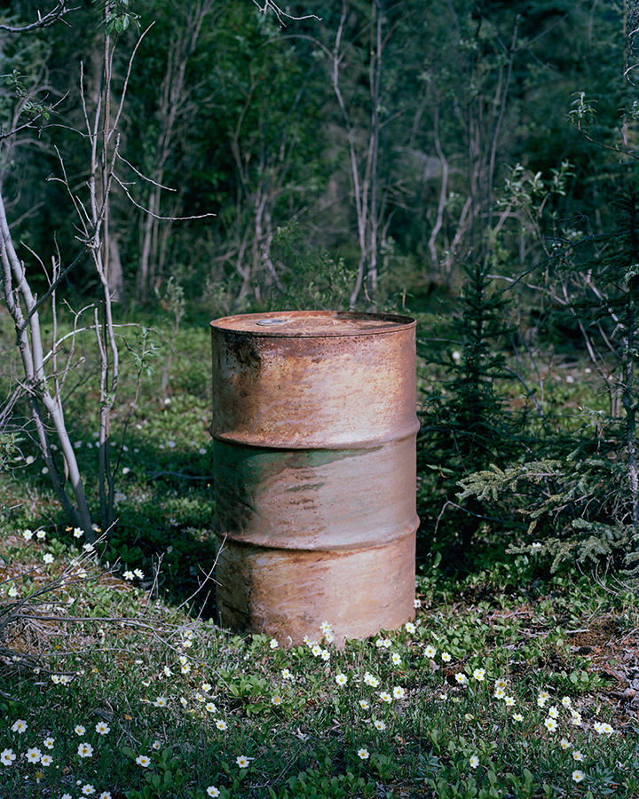 m297_oil_drum_flowers.jpg