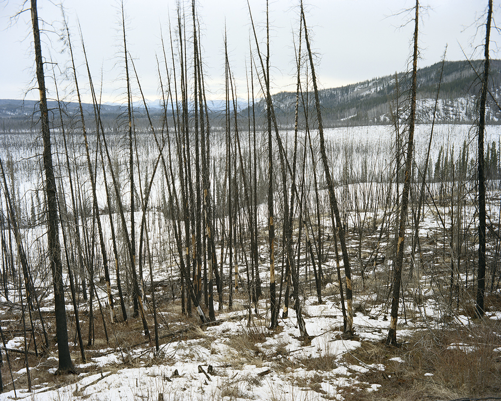 m89_burned_landscape_facing_west.jpg
