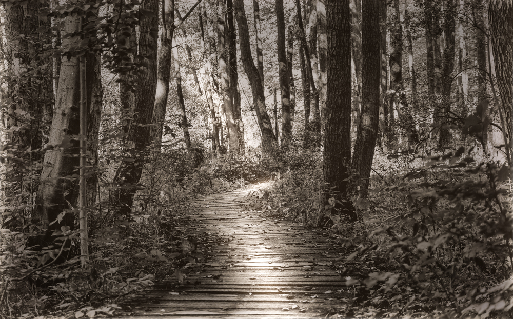 Path into the woods (1 of 1).jpg