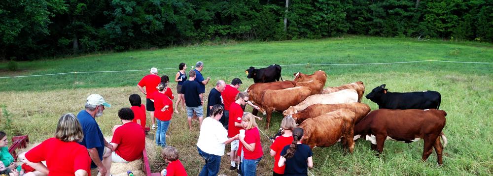 Deer Lake Ranch Resort Cattle.jpg