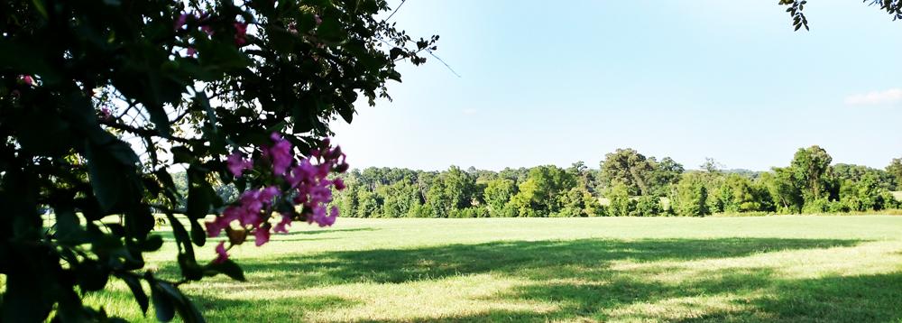 Deer Lake Ranch Resort Hay Field.jpg