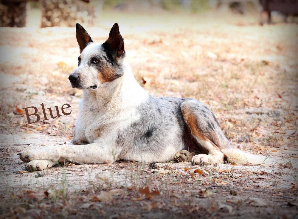Blue2ab.jpg