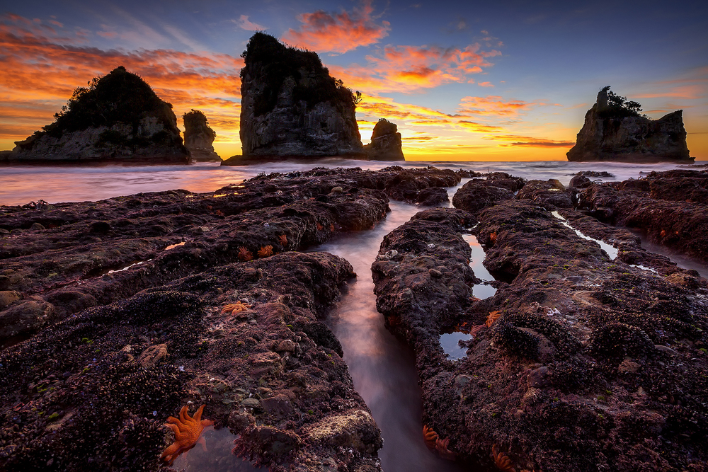 Motukiekie Rocks, West Coast, New Zealand 1