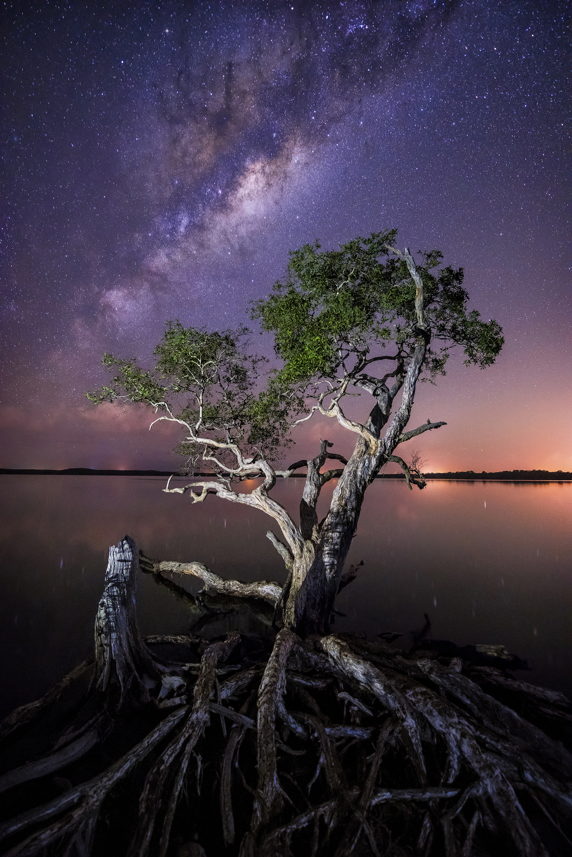 Noosa, QLD. Australia