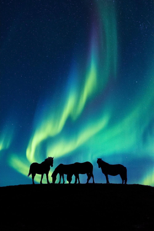 Highland Horses, Iceland