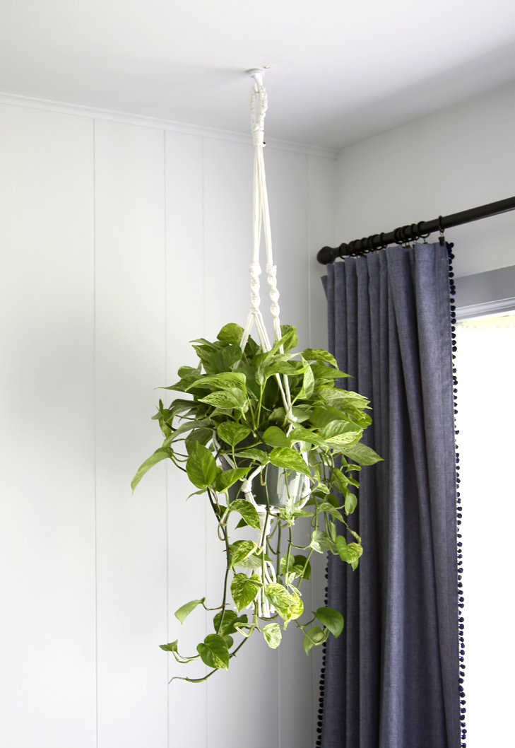 Plant+1.jpg