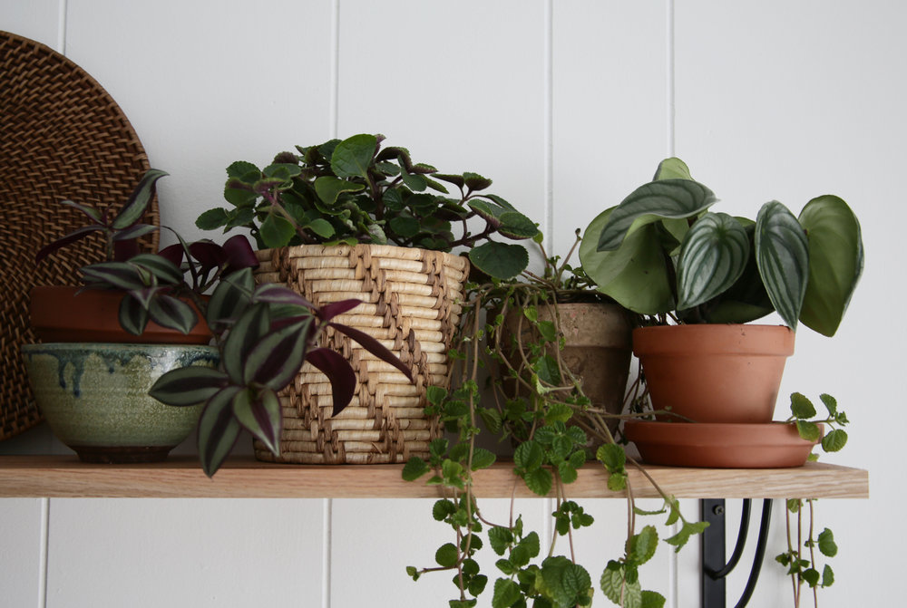 Shelf Over Bed with Plants Jungalow style