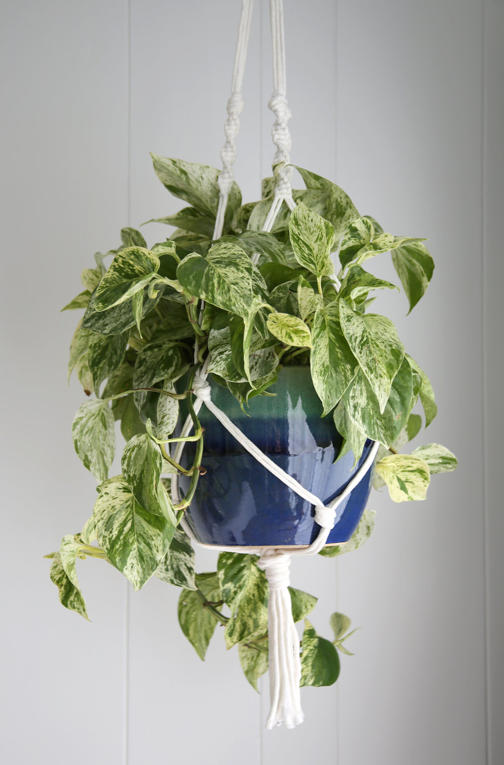 Plants B.jpg