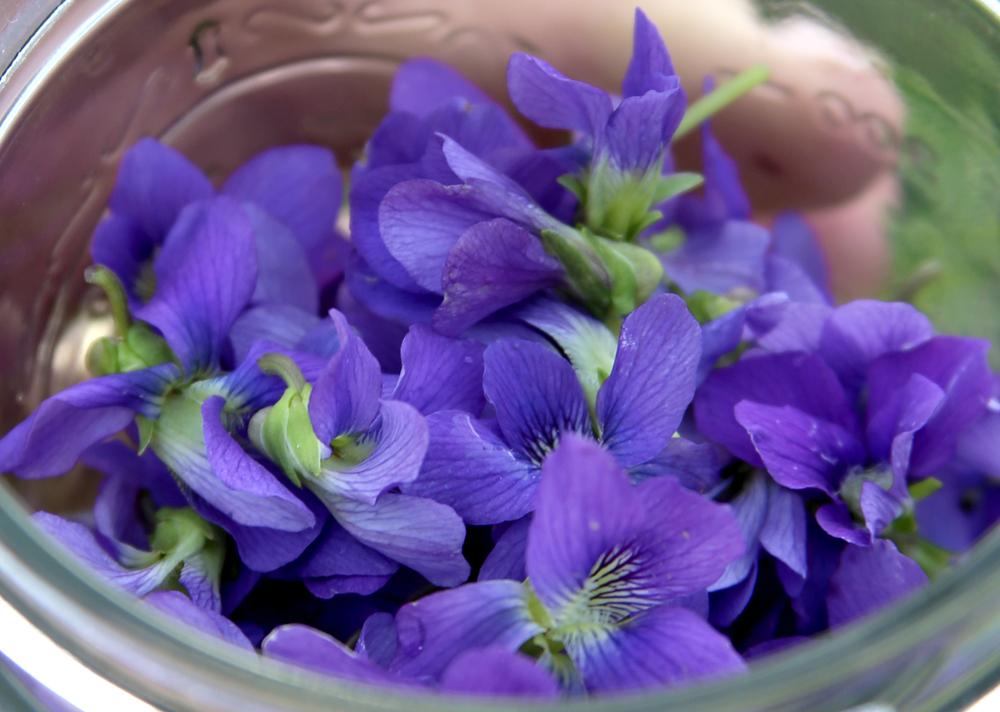 Violets 3.jpg