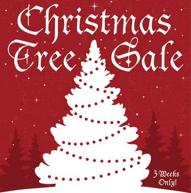 Christmas Tree On Sale