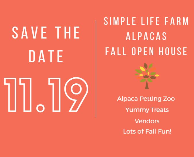 Simple Life Alpacas fall.JPG