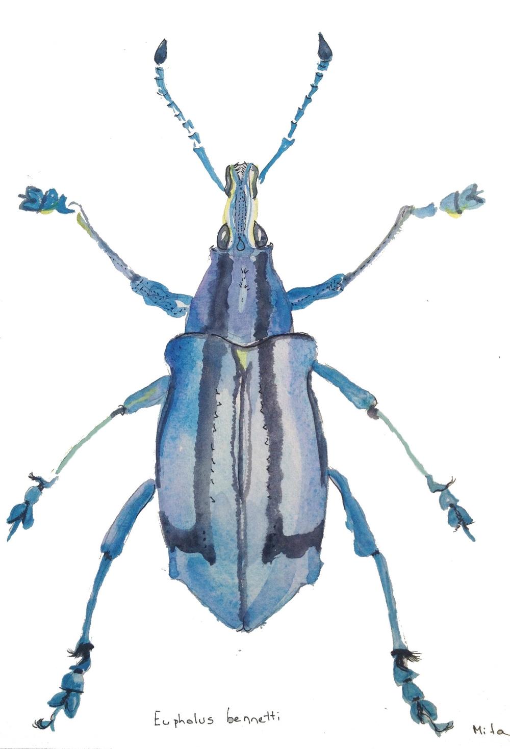 Blue Bug.jpg