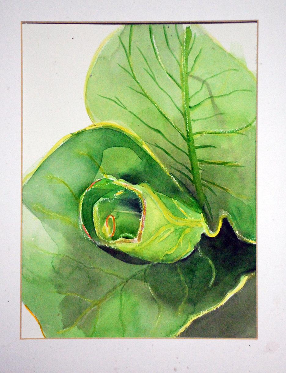 Lettuce Coil.jpg
