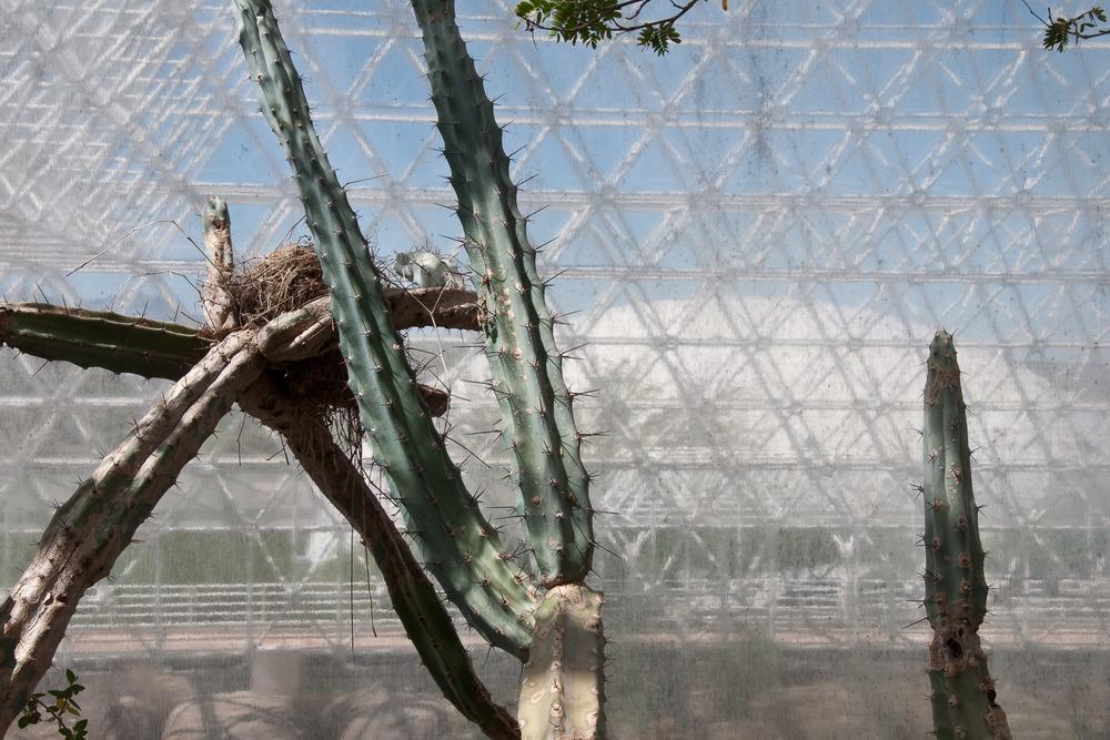 Nest, Biosphere 2