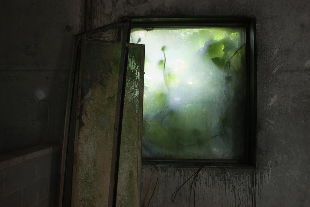 Rain Forest Back Room, Biosphere 2