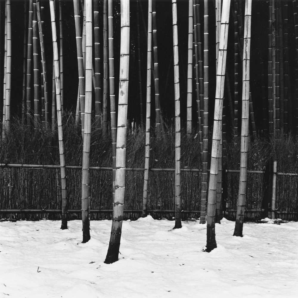 Bamboo and Snow, Tenryu-ji