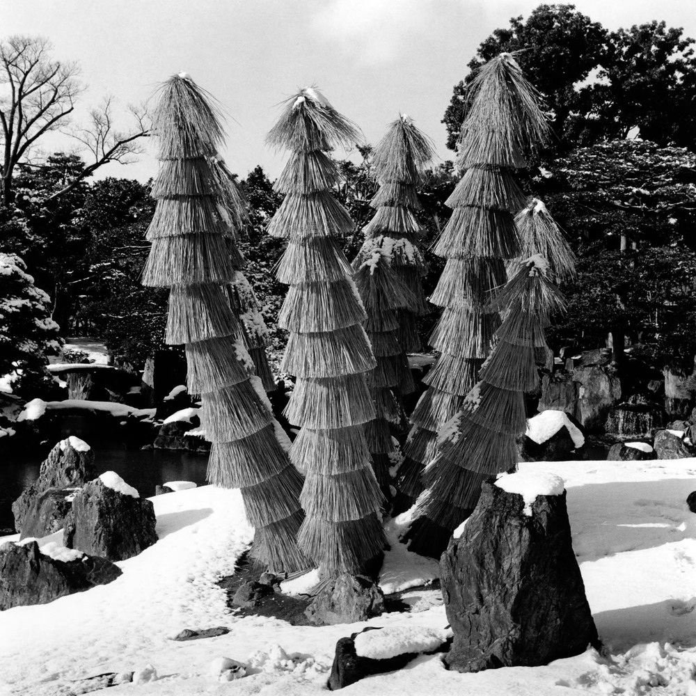 Covered Cycads, Nijo Castle