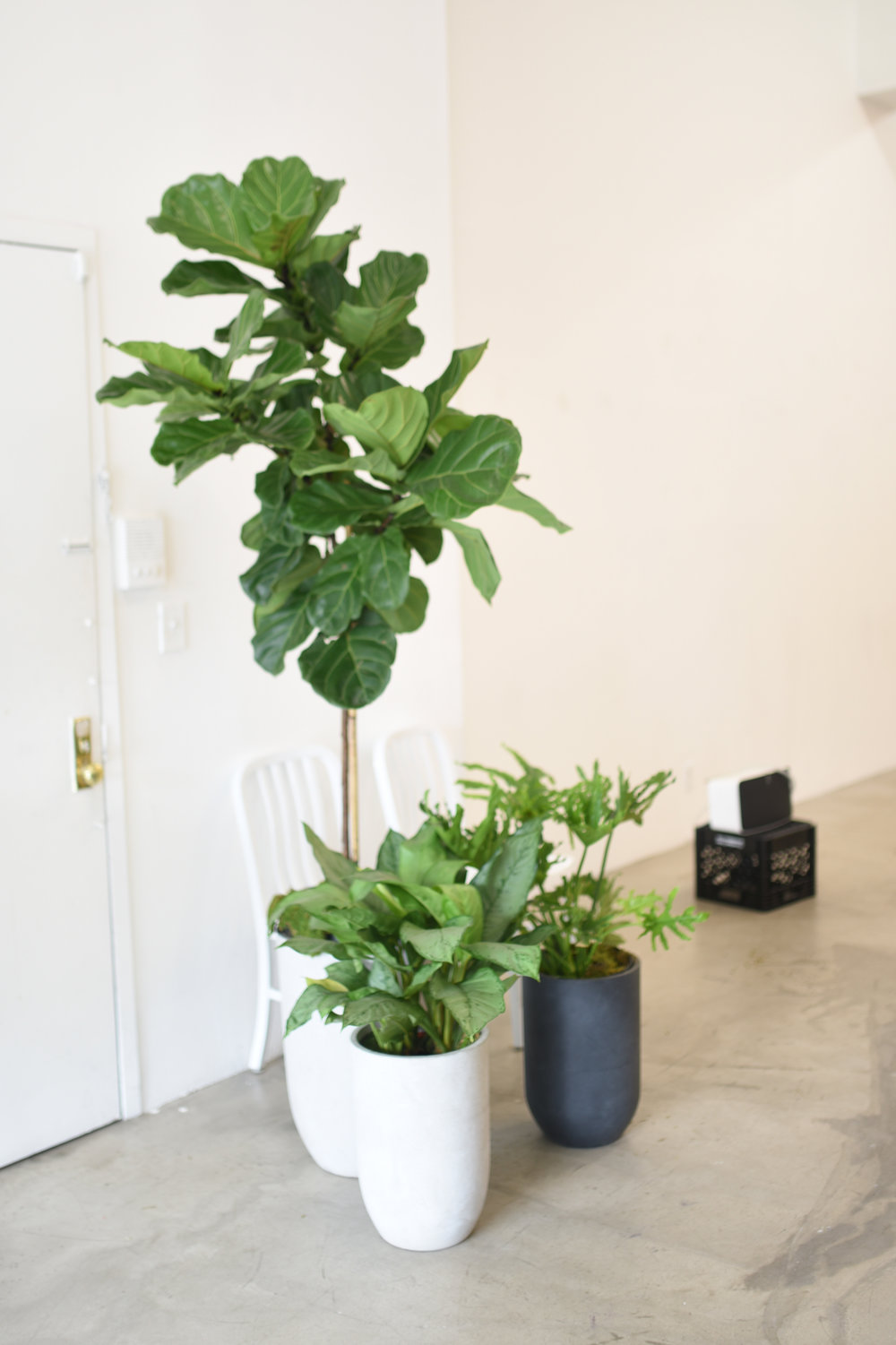 A few plants in our favorite bullet planters