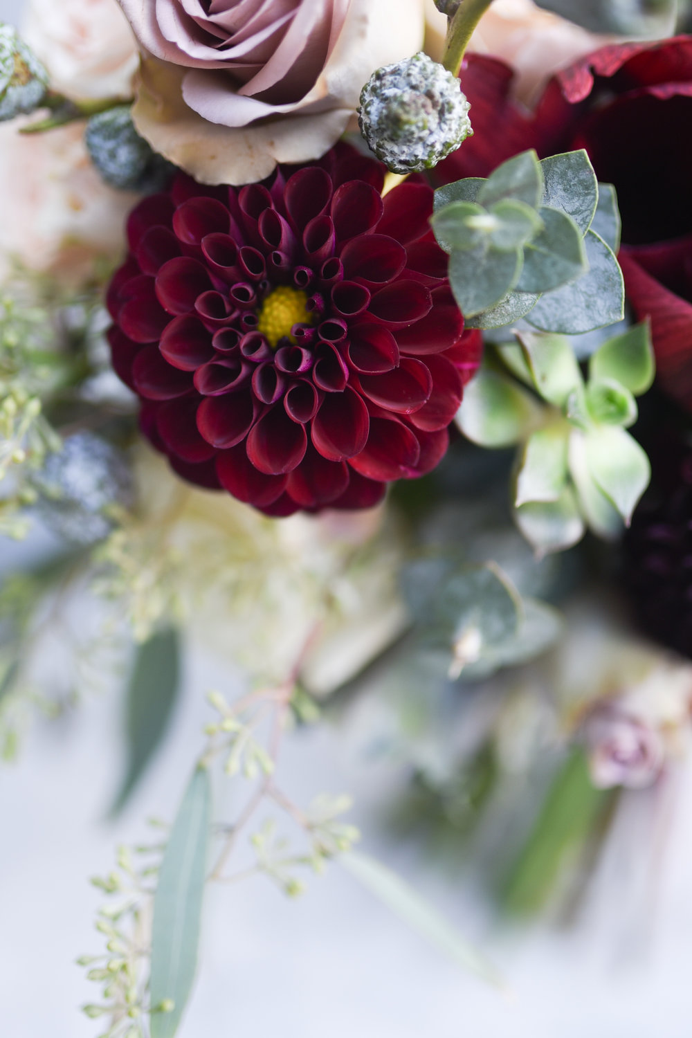 Seasonal dahlias are dark and lovely