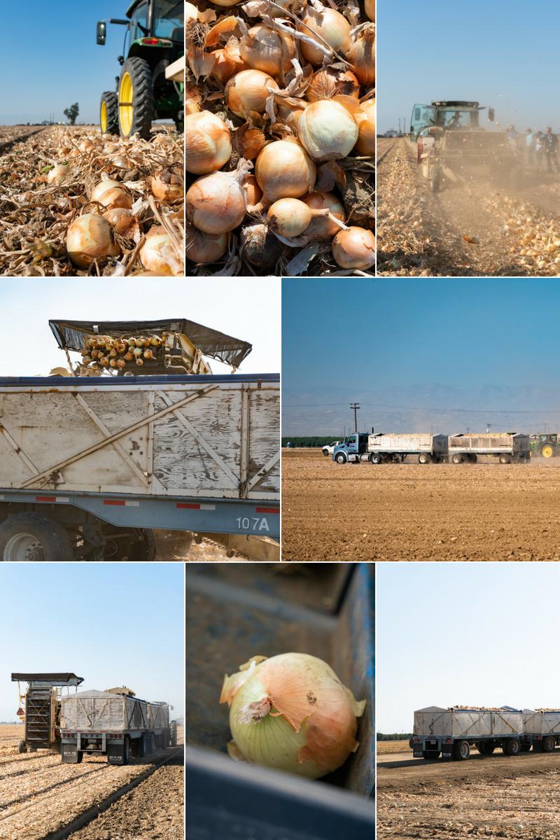 Onion Farm.jpg