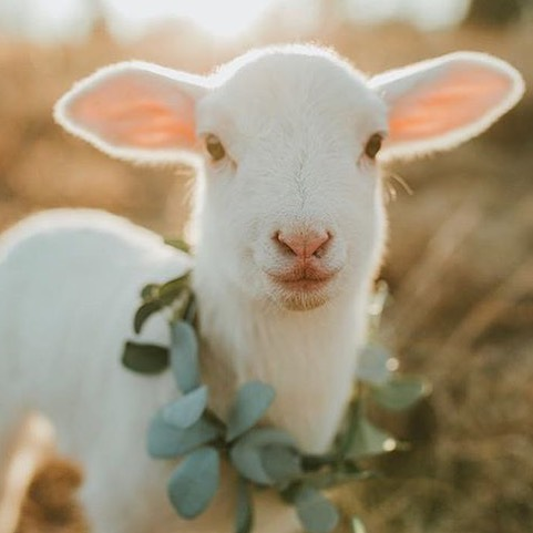 I have always wanted to live on a farm, mostly for the cute baby animals.