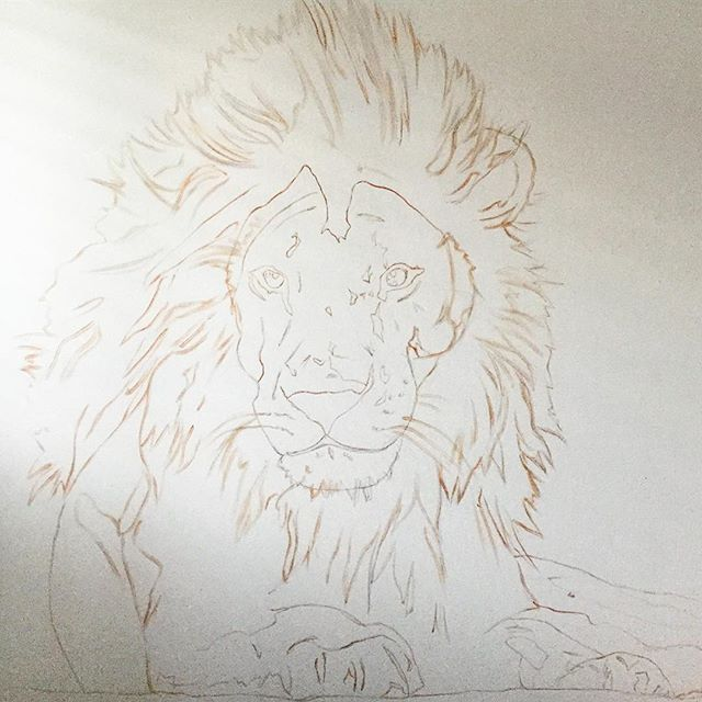 "Next commission sketched & ready for some paint🦁 ""48x48"" . . . . . #oilpaint #oilpainting #paint #art #artist #artwork #illustrate #illustration #sketch #graphic #canvas #lion #lionking #lionsmane #lionpainting #animal #animalart #wip #commission #kategordonart #create #artistsofinstagram #artgallery #draw #drawing #sandiegoartist #sandiegoart #fineart #brushstrokes"