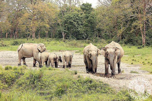 Jaldapara National Park ( Image Source )