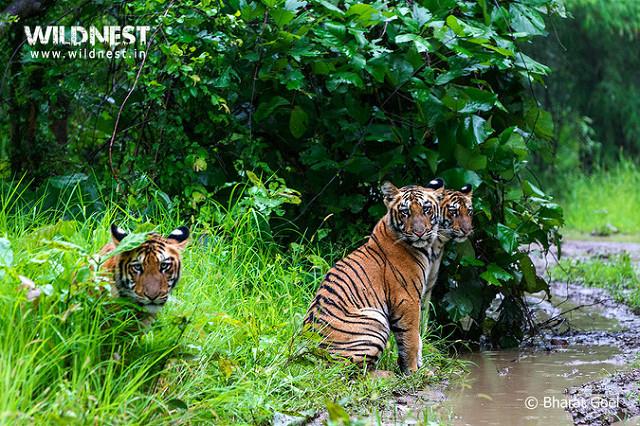 Tadoba Andhari Tiger Reserve ( Image Source )
