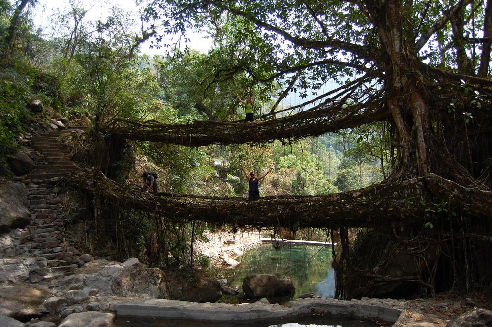 Meghalaya Living Root Bridges (Image Source)