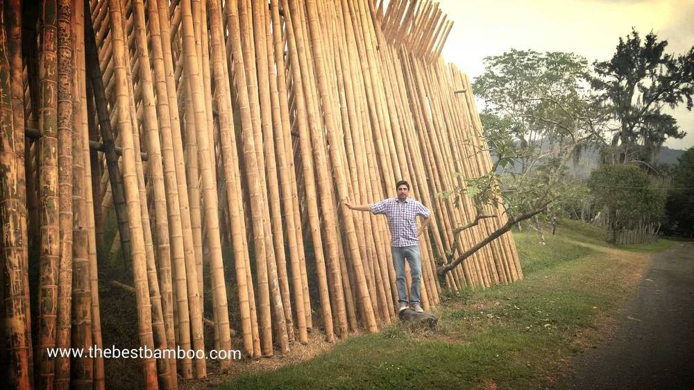 www.thebestbamboo.com pole inventory in Colombia