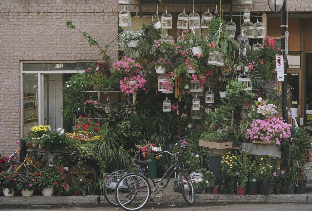 Tammy Lau's flower shop, rue Bernard, Montreal