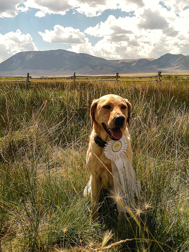 Lassen Retriever Blog 2013 Crystal_Kate_Macartney.jpg