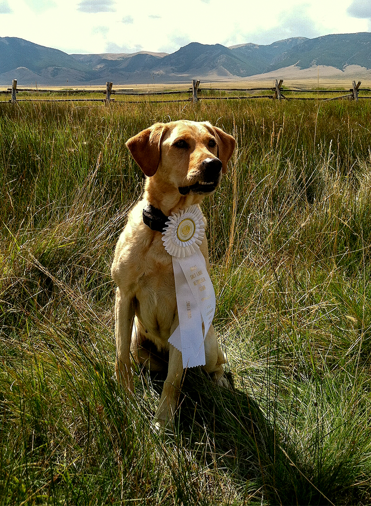 Lassen Retriever Blog Crystal2_Kate_Macartney.jpg