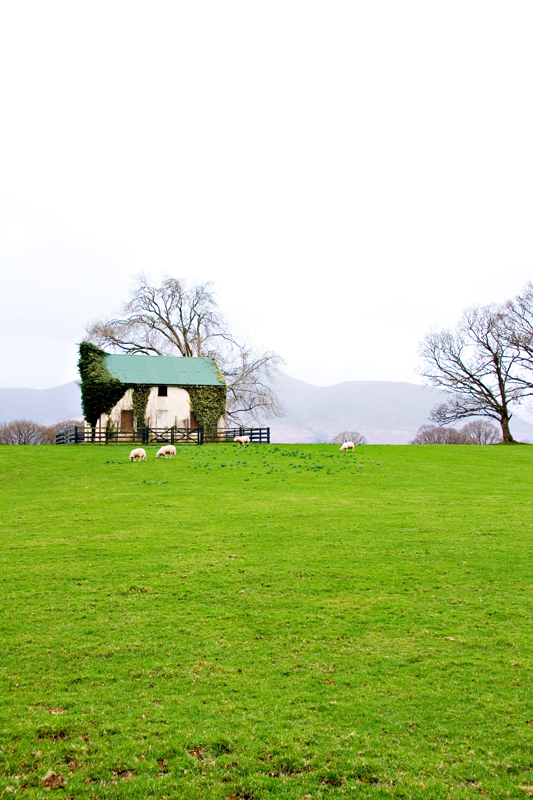 Cute Irish cabin with sheep.