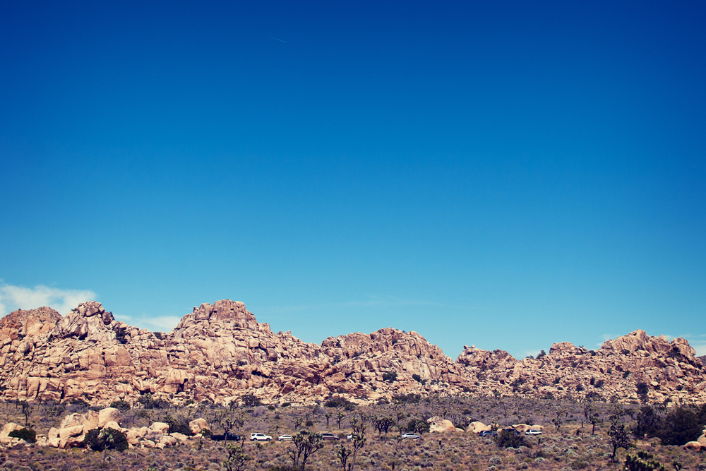 Vintage looking Joshua Tree skyline