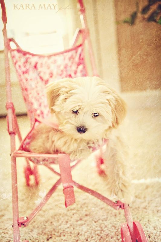 stroller-doggy