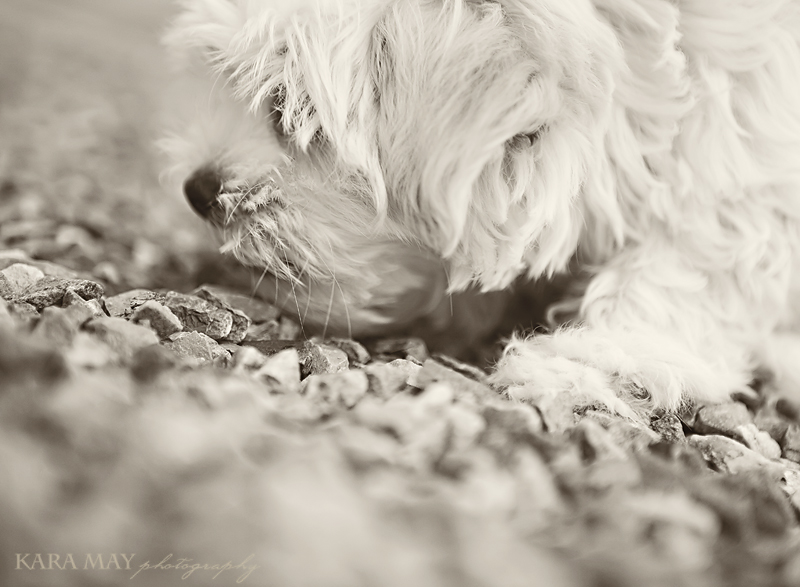 web-pup
