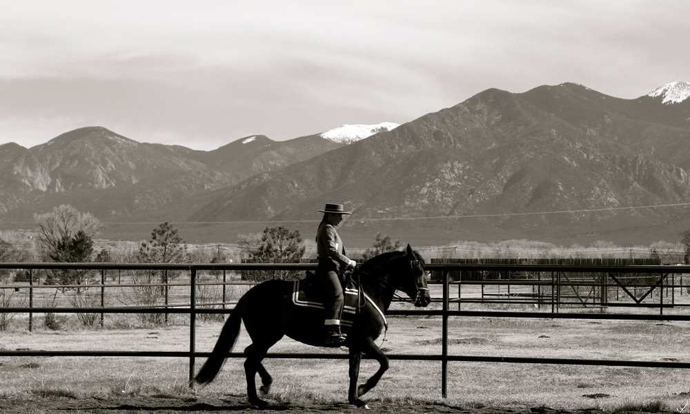 horse tango