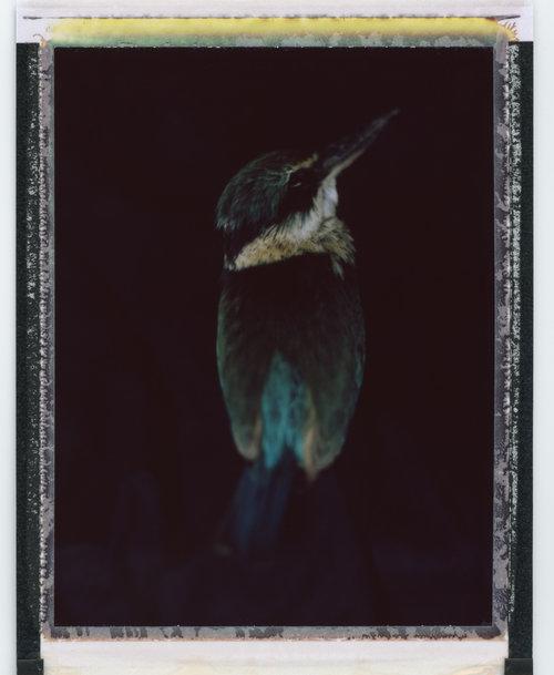2017+nov+bird+2+series537.jpg