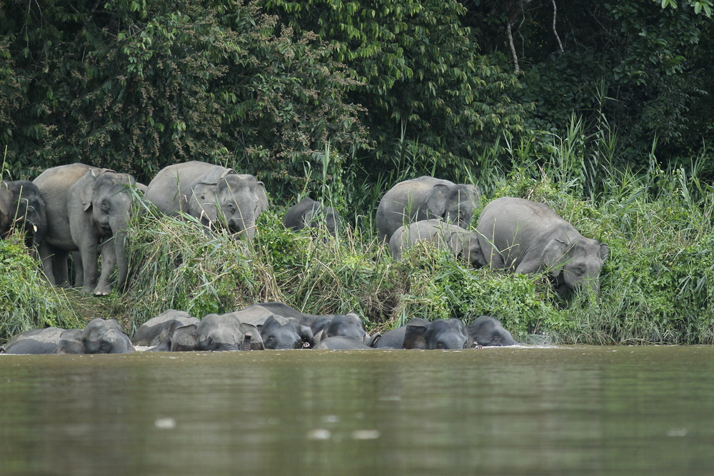 Elephants entering river_AR_0253.JPG