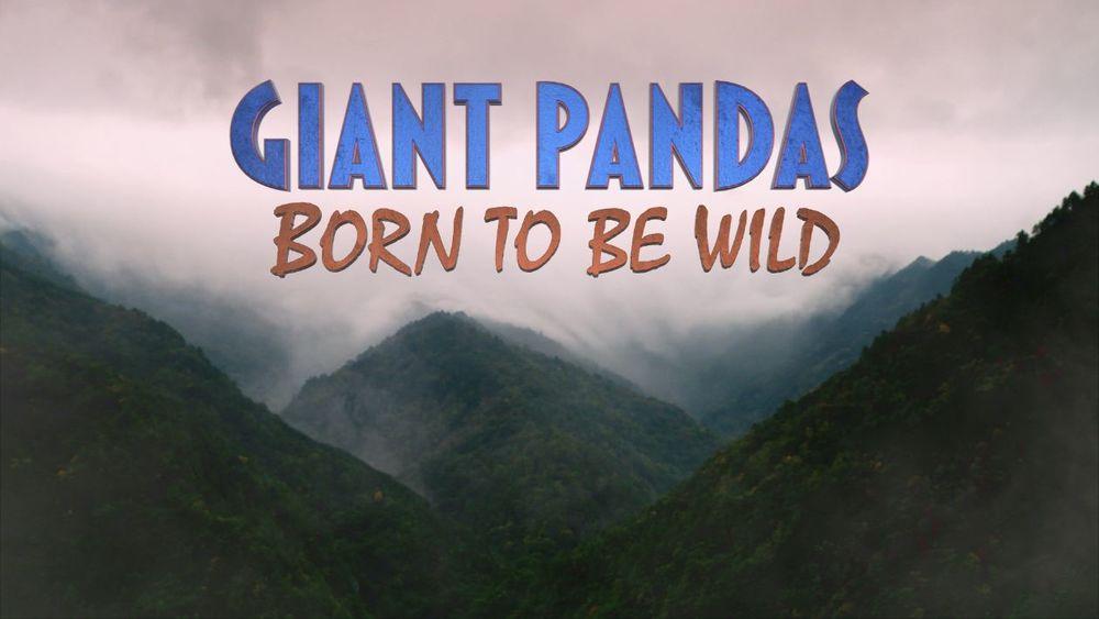 GiantPandasBornToBeWild_title.jpg