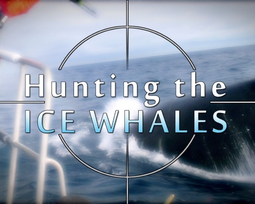 Hunting the Ice Whales.jpg