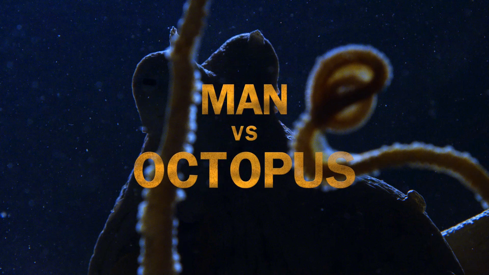 Man vs Octopus.png