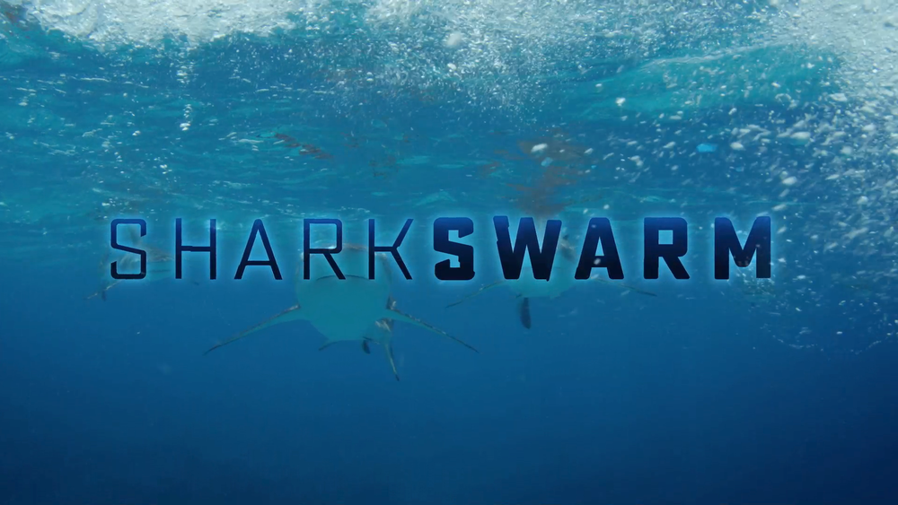 Shark Swarm.png